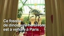 Le squelette d'un cousin du Diplodocus mis aux enchères à Paris