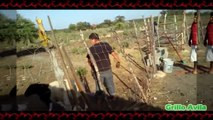 Cabra Muy Chingona - Cabras Y Ovejas Locas #5