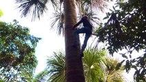 Perú quiere reforzar la protección de sus bosques en la Amazonía