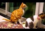Highlights of Animals - VERY FUNNY ANIMALS   Animal Videos - Viral Videos
