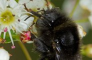 Holidaymakers have been asked to help find one of the UK's rarest bumblebees