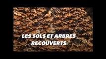 La Sardaigne envahie par des millions de sauterelles