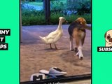 Tik Tok Pets: Funny & Cute #15