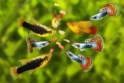 Adapter la nourriture des poissons en fonction des saisons