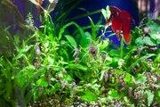 Comment supprimer les escargots de mon aquarium ?