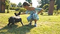 Les fondements de l'éducation positive du chien