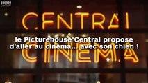 Le Picturehouse Central propose d'aller au cinéma... avec son chien !