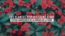 Les plantes disparaissent à une vitesse ahurissante sur la surface de la Terre