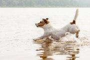 Activité canine : les besoins éthologiques du chien