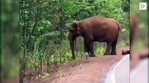 A 'funeral procession' of elephants for a dead child in India
