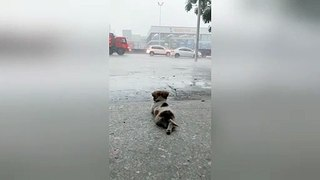 Content puppy chills out watching rainfall in China's Guangdong
