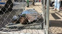 La campagne #NoKidsInCage dénonce les détentions de mineurs aux Etats-Unis