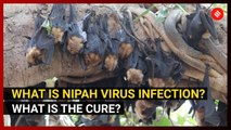 What is Nipah virus infection? What is the cure?