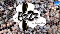 le_BZZZ_de_la_semaine_Semaine_2