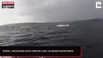Écosse : Une baleine saute hors de l'eau, les images incroyables (Vidéo)