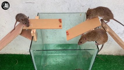 Rat Trap Water - 12 Mice in trapped 1 Hour - Mouse trap - How to Make Rat Trap