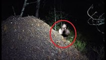 10 Creepiest Ghost Sightings Ever Caught On Camera