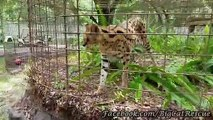 TREAT TIME for Zimba Serval.