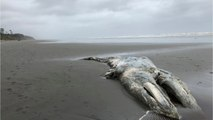 So Many Dead Whales Washing Up On West Coast: NOAA Pleading For Help