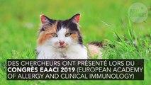 La fin des allergies aux chats