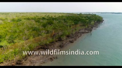 Flying over Sundarban Tiger Reserve , rare footage of how the Mangrove delta looks