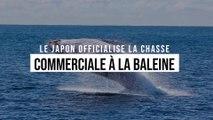 Le Japon reprend la chasse commerciale à la baleine dès le 1er juillet