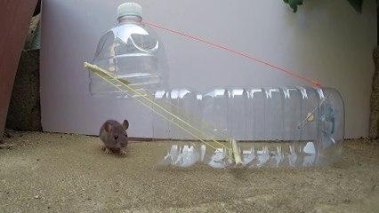 Water bottle Mouse_Rat Trap