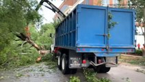 Crews cleanup downed trees after strong storm