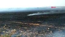 ŞANLIURFA Ceylanpınar'da 40 dönüm buğday tarlası yandı