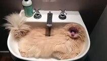 Ce chat a trouvé un endroit pour sa sieste pile la bonne taille. Trop cute !