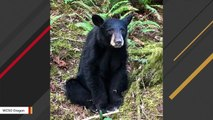 A Black Bear Was Put Down In Oregon After People Took Selfies, Fed Him