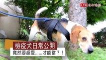 檢疫犬日常公開 竟然要超愛……才能當?!