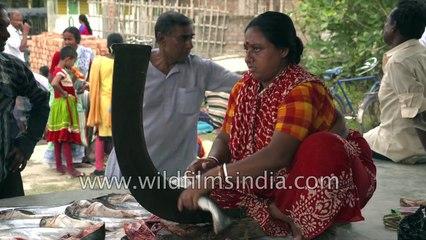 Mouth watering Sea food from Sundarban, fish market of Sundarban, Durgapur village, Satjelia , West Bengal