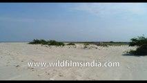 Bakkhali Sunset Point, 4k Aerial  Sunama Park, Susni Island Mangroves, West Beach Side , Frasergunj Harbour, West Bengal,  Bay of Bengal , India- stock footage