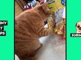 Tik Tok Pets: Funny Cute Animals #21