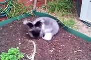 Cute Bunnies  Compilation 2019 | Cute Rabbits Videos Compilation | Viral Animal Videos