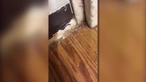 Military housing contractor accused of ignoring dangerous filth, misleading Air Force