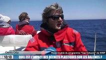 Quel est l'impact des déchets plastiques sur les baleines ?