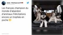 Les Français, champions d'Europe des abandons d'animaux, selon 30 Millions d'amis