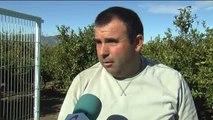 Las altas temperaturas y la humedad que ha dejado la gota fría traen plagas de mosquitos en Castellón