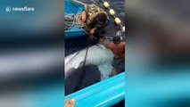 Indonesian fishermen rescue and release whale shark that was entangled in their net