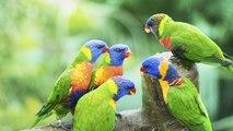 ¿Qué alimentos mantienen sanas a las aves?