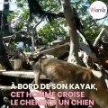 Il sauve la vie de ce chien errant vivant sur une île