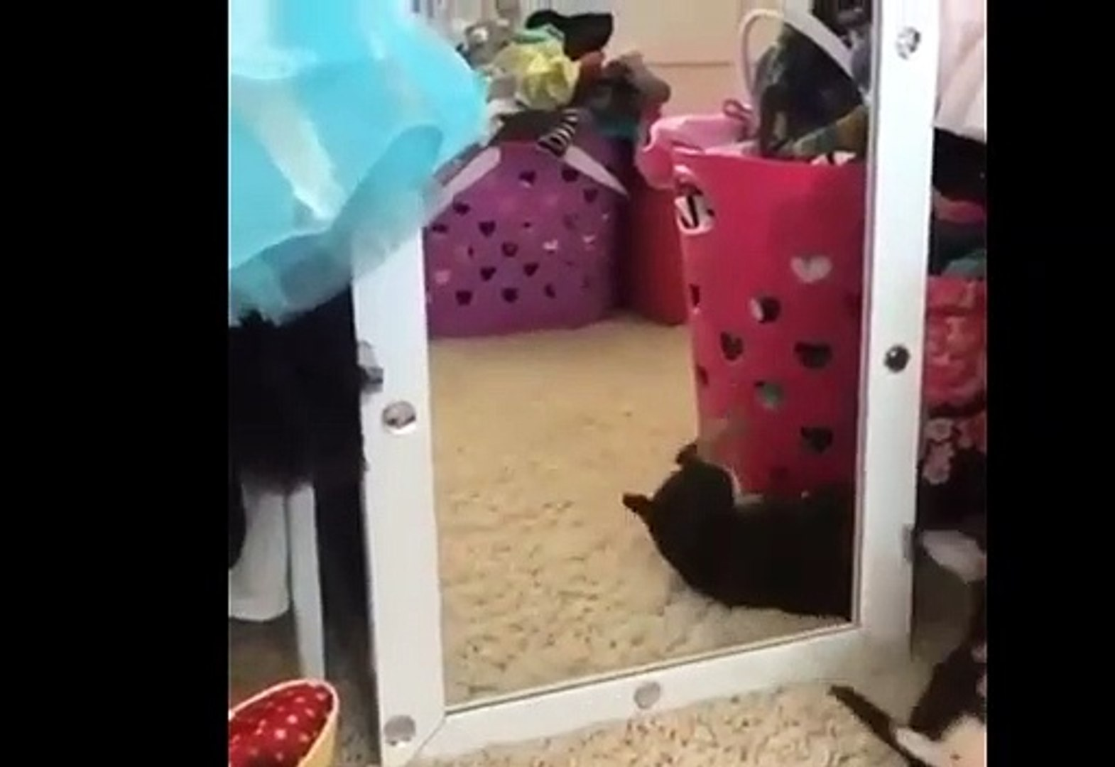 Dogs vs Mirrors  Compilation 2019 | Funny Animal Videos | Funny Dogs Videos 2019 Compilation