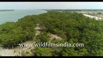 Birds eye view of UNESCO World Heritage Site , the Highly Endangered Sundarban. 4k Phantom Aerial stock footage, Bay of Bengal, India.