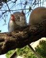 Cette petite souris a trouvé l'endroit parfait pour prendre de l'air. Trop chou !