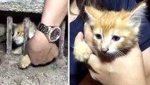 Rescatan a un gatito atrapado al huir de unos perros