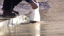 Recogen peces a mano en plena calle en Miranda de Ebro (Burgos)