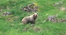 À 9 ans, il rencontre un ours sauvage dans les Pyrénées et le filme