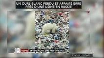 Un ours blanc affamé dans une zone industrielle russe